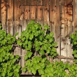 La D.O. Rioja alcanza la venta de casi 400 millones de botellas anuales